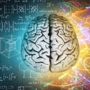 Memória, agyműködés